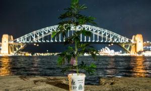 Buying weed online: yay or nay? | Dopamine